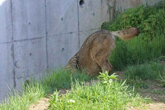 4月のオオカミたち~ロイ&チロ_b0355317_22002007.jpg