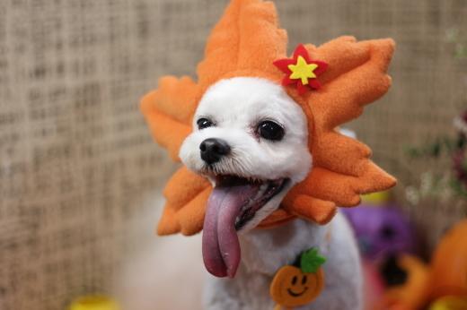 10月27日ご来店のワンちゃんです!!_b0130018_00201620.jpg