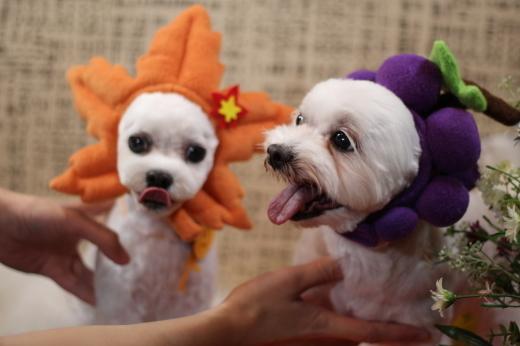 10月27日ご来店のワンちゃんです!!_b0130018_00225117.jpg