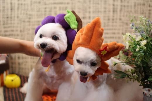 10月27日ご来店のワンちゃんです!!_b0130018_00231486.jpg