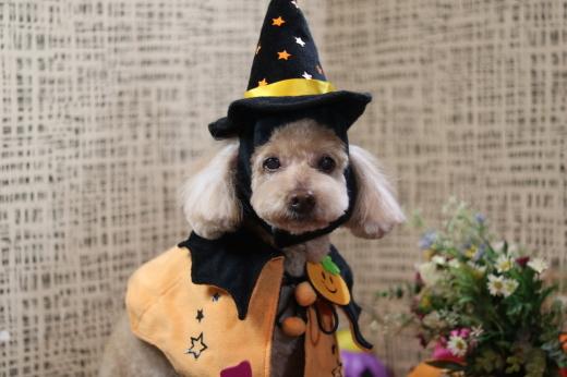 10月27日ご来店のワンちゃんです!!_b0130018_00380282.jpg