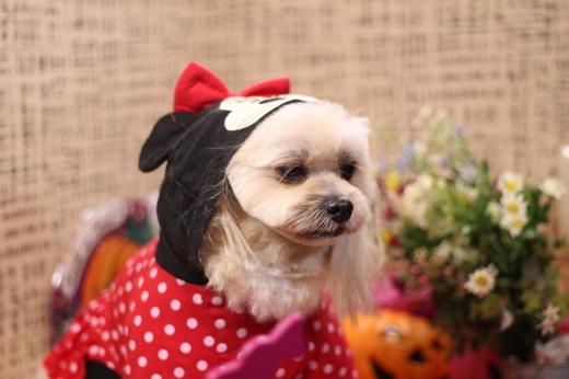 10月27日ご来店のワンちゃんです!!_b0130018_00573963.jpg