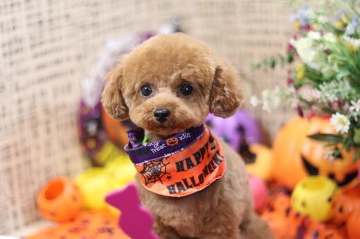 10月27日ご来店のワンちゃんです!!_b0130018_01023474.jpg
