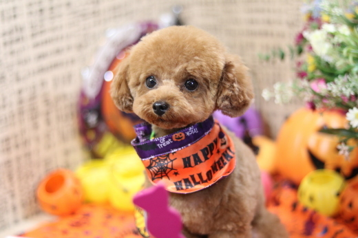 10月27日ご来店のワンちゃんです!!_b0130018_01031625.jpg