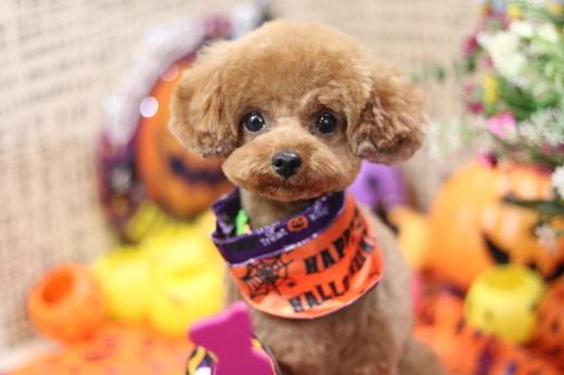 10月27日ご来店のワンちゃんです!!_b0130018_01034687.jpg
