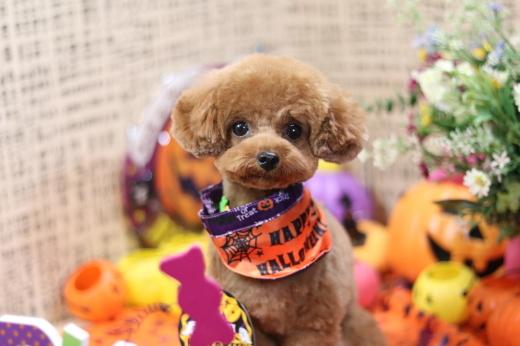 10月27日ご来店のワンちゃんです!!_b0130018_01040964.jpg