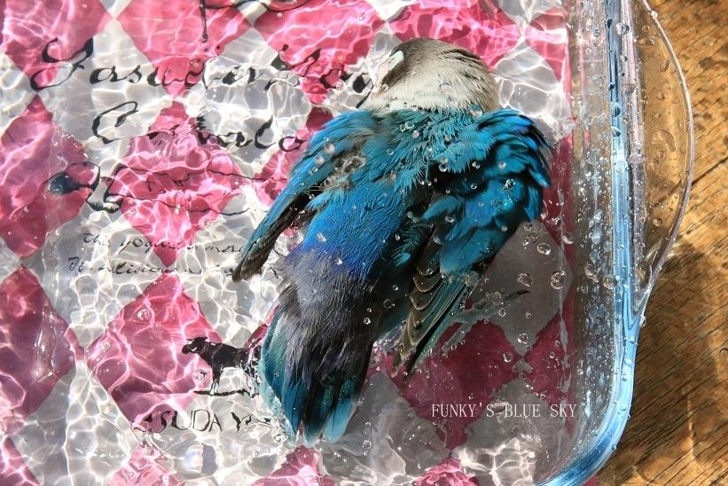 水浴びB.Bの記録 → (チポの隣で・10月26日)_c0145250_10494142.jpg