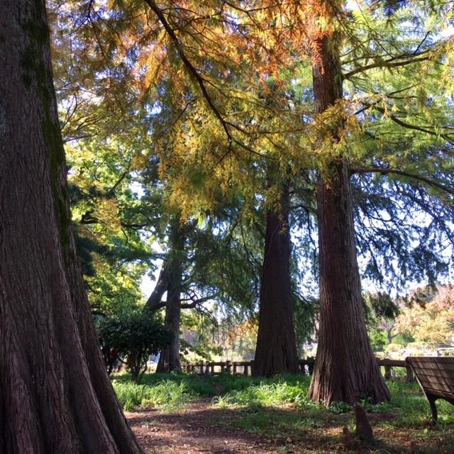 Fine autumn day  サージュとピクニック♪_a0165160_16481785.jpg