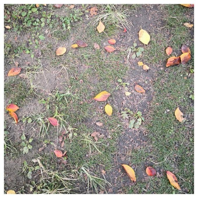 秋のいろ_c0160161_10225714.jpg