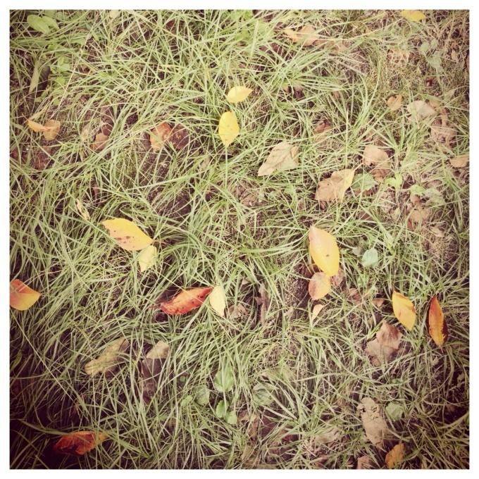 秋のいろ_c0160161_10233779.jpg