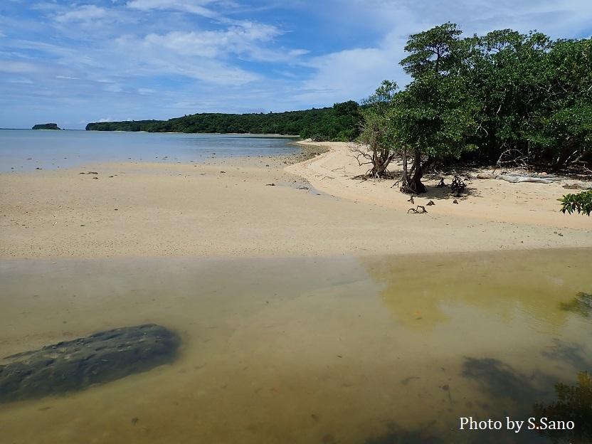 西表島のマングローブ_b0348205_00325339.jpg