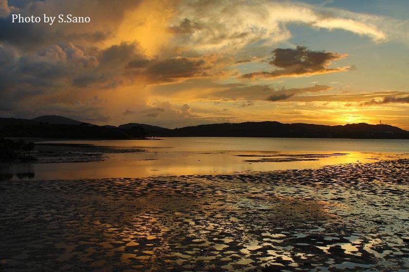 西表島のマングローブ_b0348205_00342772.jpg