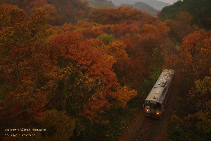 紅葉の森を抜けて_d0309612_00354645.jpg