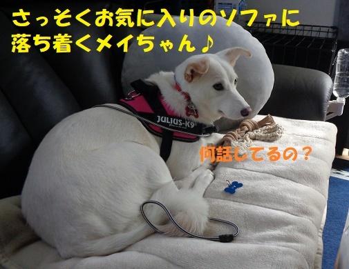 f0121712_05265277.jpg