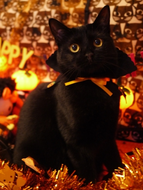 ハロウィン猫 めりぃぽぴんず編。_a0143140_16594476.jpg