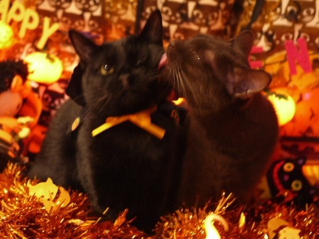 ハロウィン猫 あんしゃぁりぃめりぃぽぴんず編。_a0143140_17085903.jpg