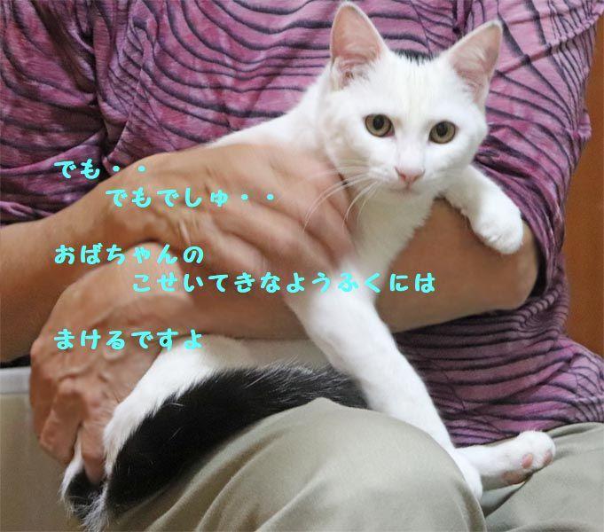 d0393041_21233685.jpg