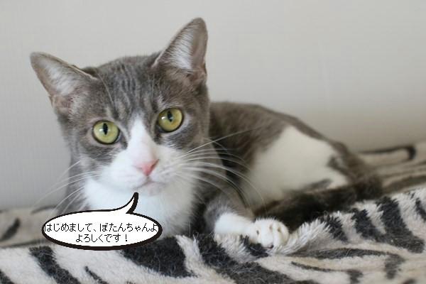 新入りさん達と猫団子_e0151545_20480022.jpg