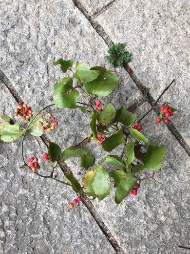 赤い実で秋を楽しむ_c0334574_19105570.jpg