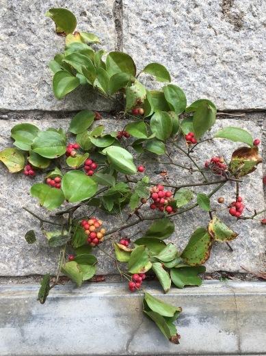 赤い実で秋を楽しむ_c0334574_19110644.jpg