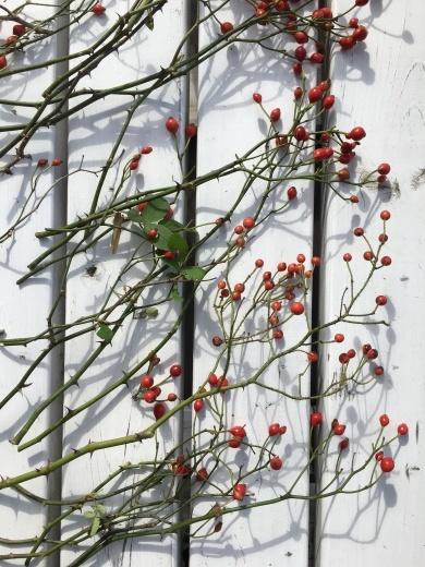 赤い実で秋を楽しむ_c0334574_19133351.jpg