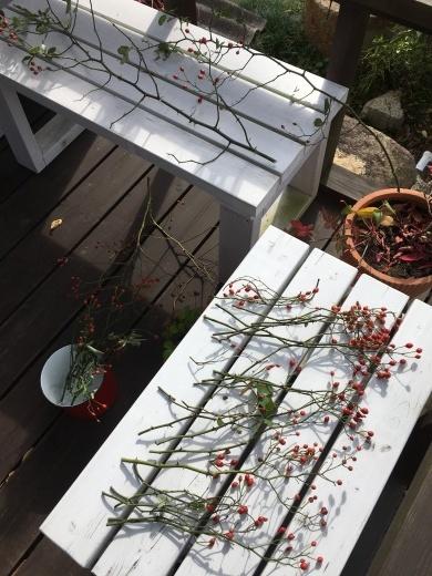 赤い実で秋を楽しむ_c0334574_19150069.jpg