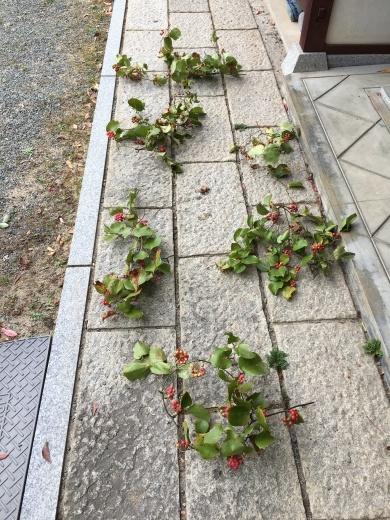 赤い実で秋を楽しむ_c0334574_19175034.jpg