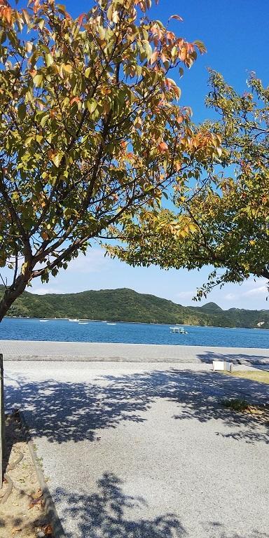 鳴門ウチノ海総合公園の秋_d0043390_22302576.jpg