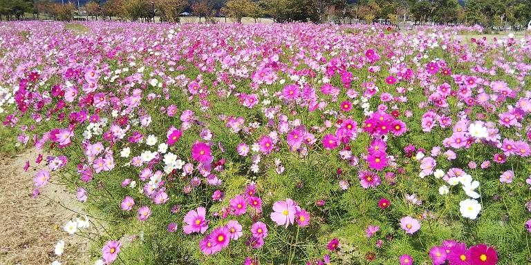鳴門ウチノ海総合公園の秋_d0043390_22354954.jpg