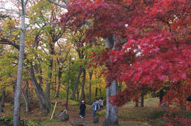 紅葉の大沼公園(秋の旅行 1日目10/27の①) _c0360399_17074686.jpg