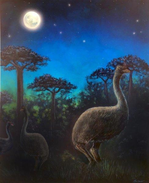 頭蓋骨から絶滅したトリが嗅覚のするどい夜行性だったことがわかる_c0025115_23412693.jpg