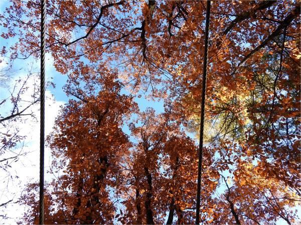 おしぎっぱの森:紅葉だより_b0174425_21134552.jpg