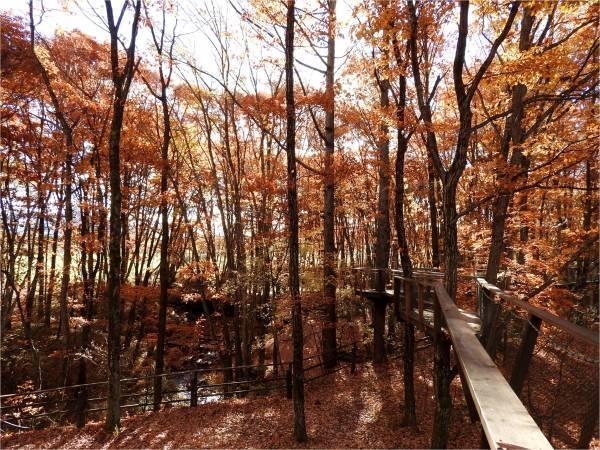 おしぎっぱの森:紅葉だより_b0174425_21135300.jpg