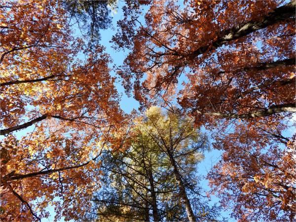 おしぎっぱの森:紅葉だより_b0174425_21140325.jpg