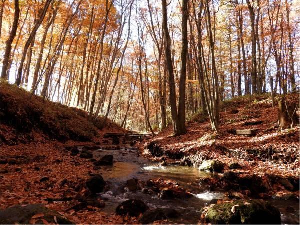 おしぎっぱの森:紅葉だより_b0174425_22003414.jpg