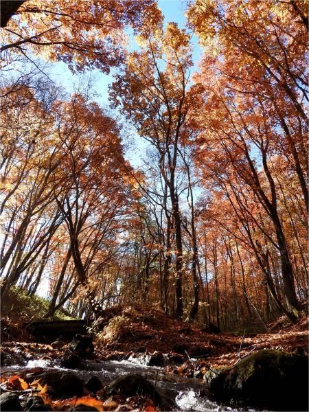 おしぎっぱの森:紅葉だより_b0174425_22020996.jpg