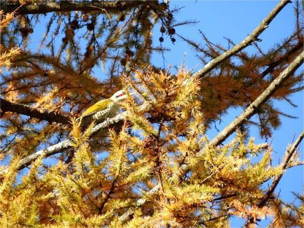 おしぎっぱの森:紅葉だより_b0174425_22023859.jpg