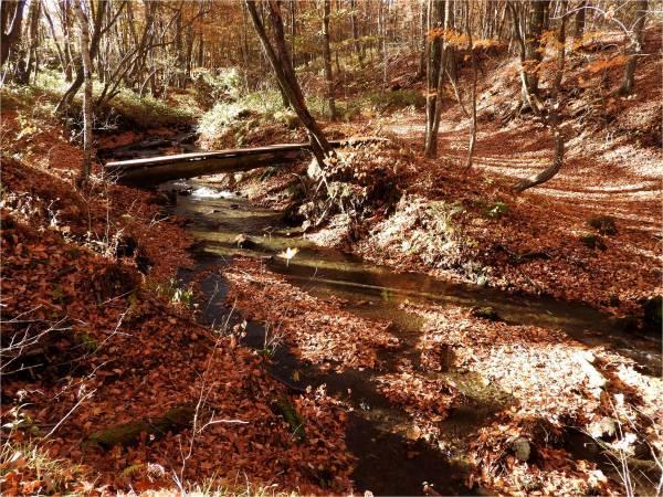 おしぎっぱの森:紅葉だより_b0174425_22043570.jpg