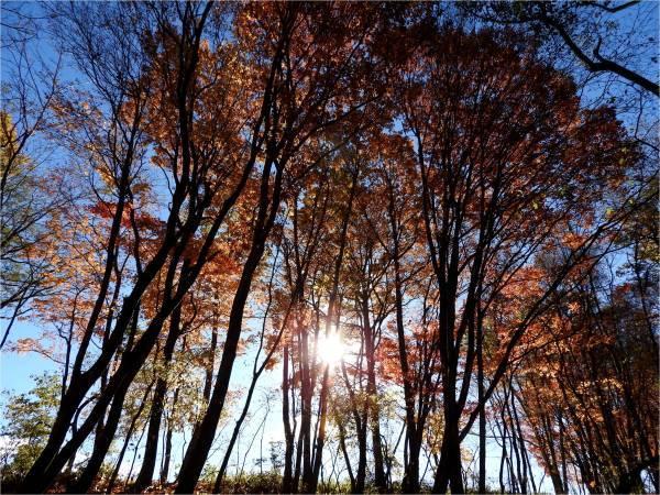 おしぎっぱの森:紅葉だより_b0174425_22064702.jpg