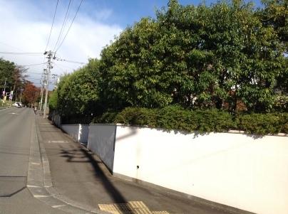 庭木剪定_c0186441_18304091.jpg
