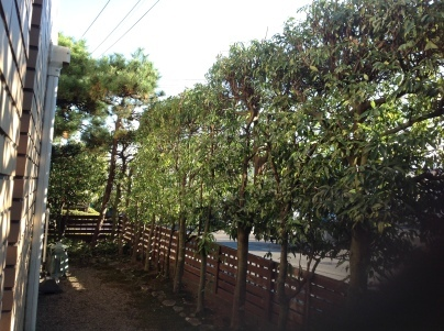 庭木剪定_c0186441_18325746.jpg
