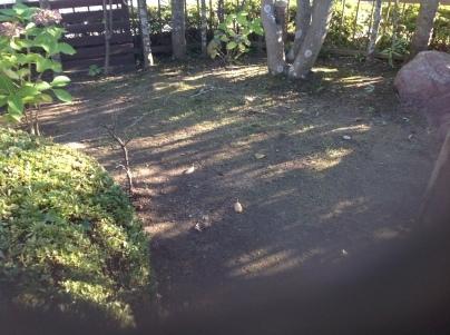 庭木剪定_c0186441_18341212.jpg