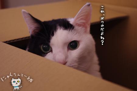大きな子猫しゃん_e0031853_23512709.jpg