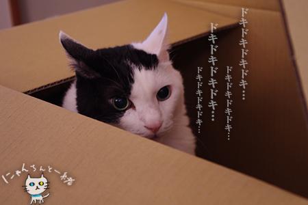 大きな子猫しゃん_e0031853_23522594.jpg