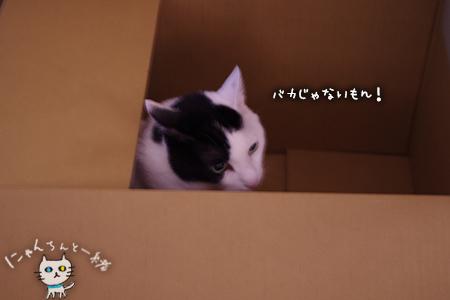 大きな子猫しゃん_e0031853_23524761.jpg