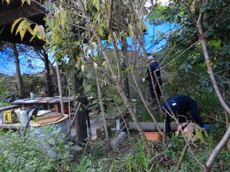 ナラ枯れ被害 2割・・・うみべの森_c0108460_17190748.jpg