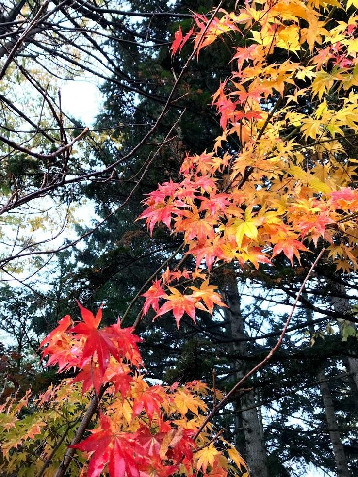 秋深まって、キノコの季節_c0189970_17592920.jpg