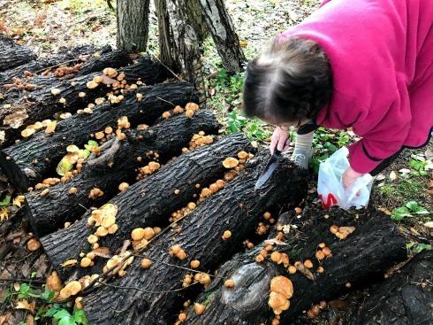 秋深まって、キノコの季節_c0189970_18033312.jpg