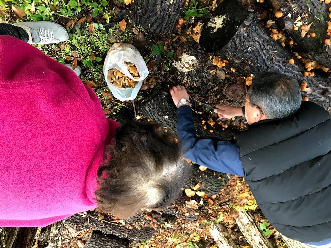 秋深まって、キノコの季節_c0189970_18034995.jpg