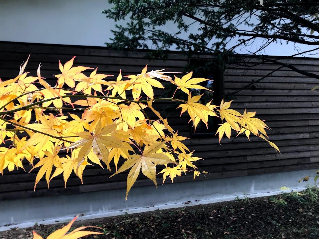 秋深まって、キノコの季節_c0189970_18091110.jpg
